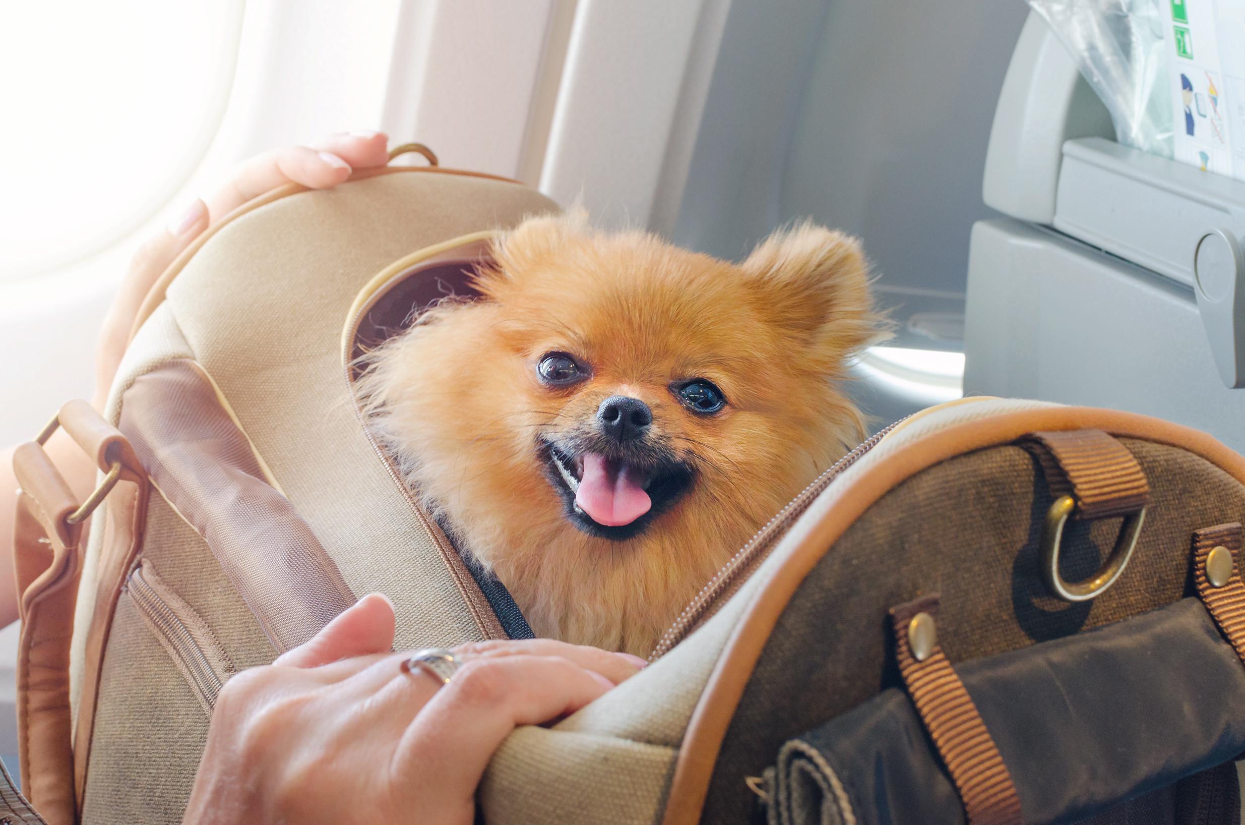 Ob ,mit flugzeug oder Zug, Animallogistics sind eure Tier Transport Partner Nummer Eins!