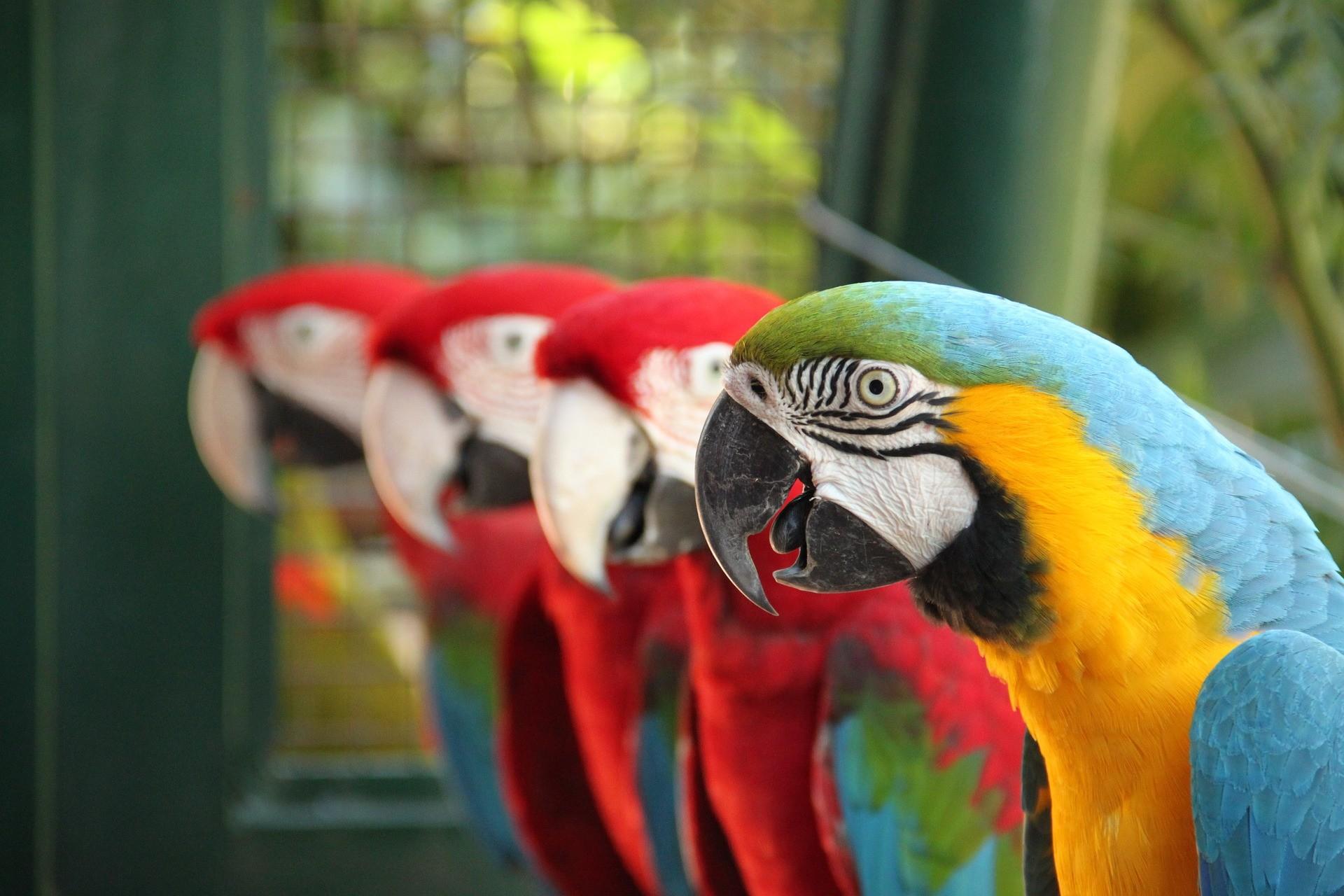 Falken, Papageien, und andere gefiederte Freunde