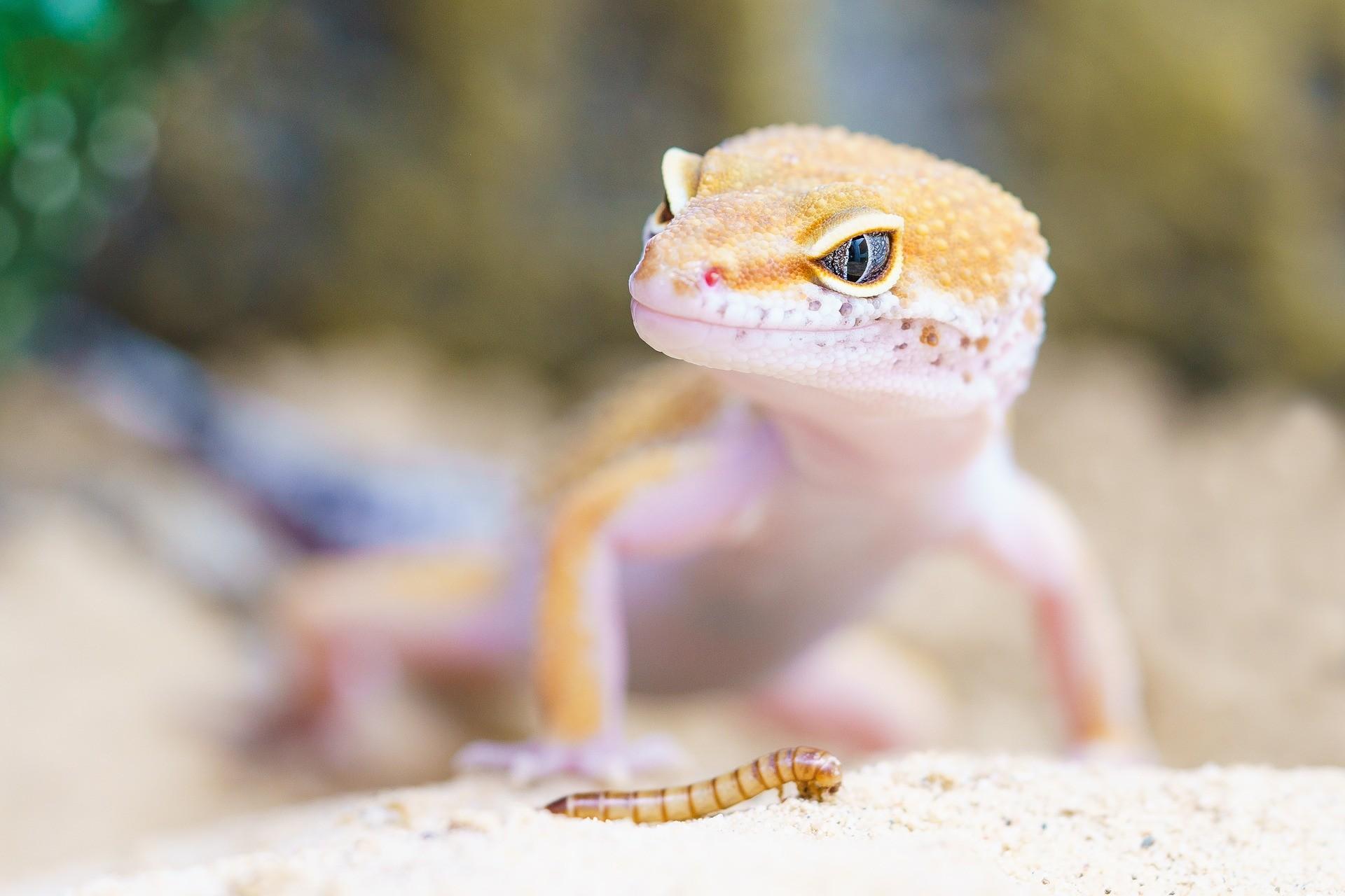 Reptiles & Co.