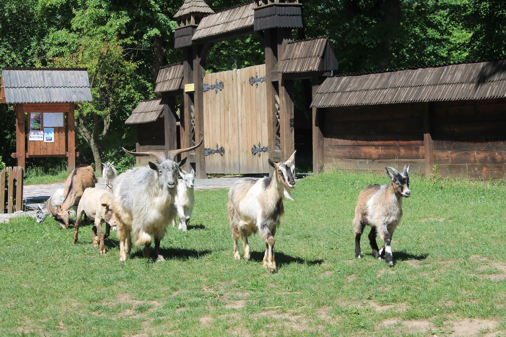 Zoo Animals 1
