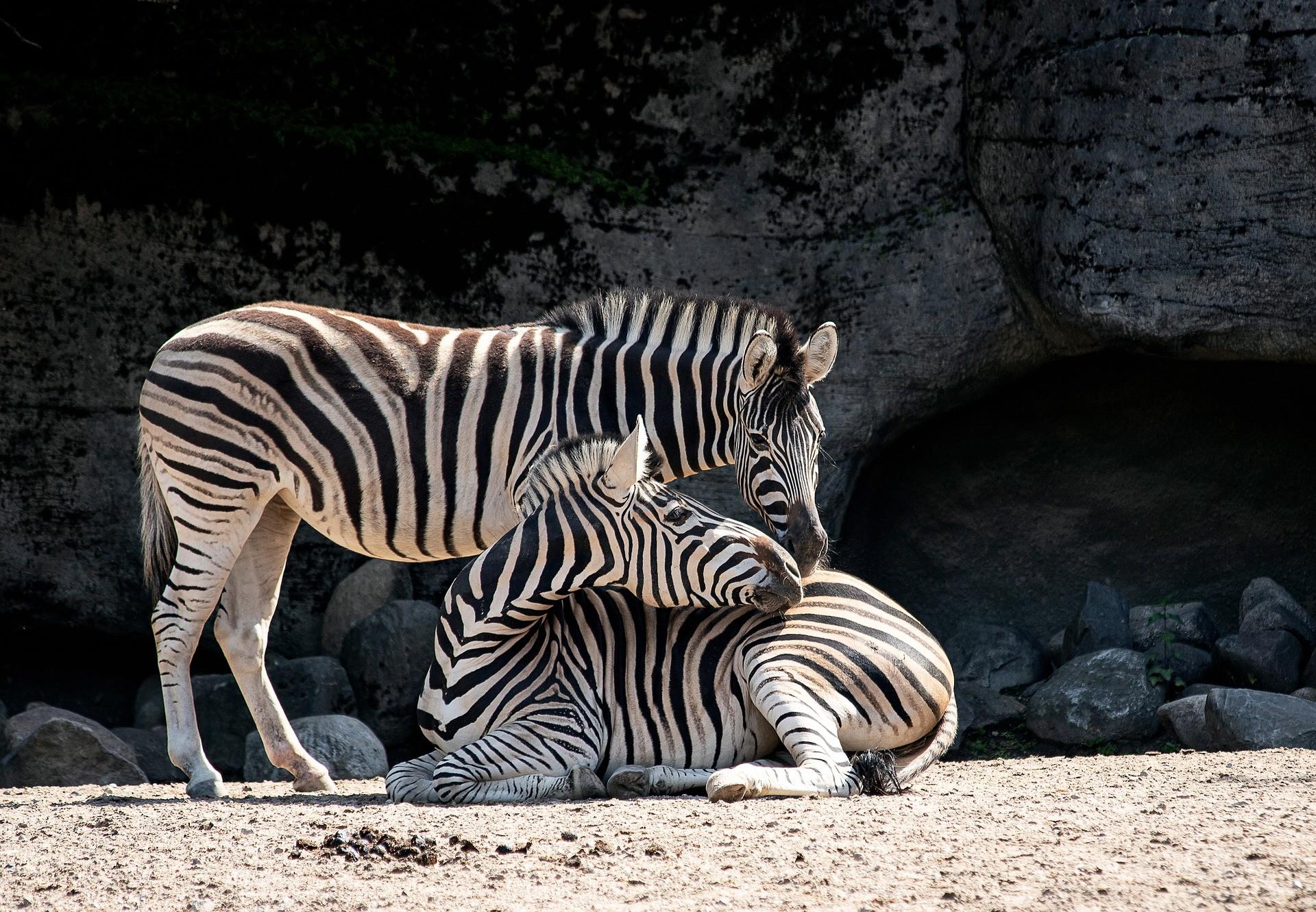 Zoo Animals 2