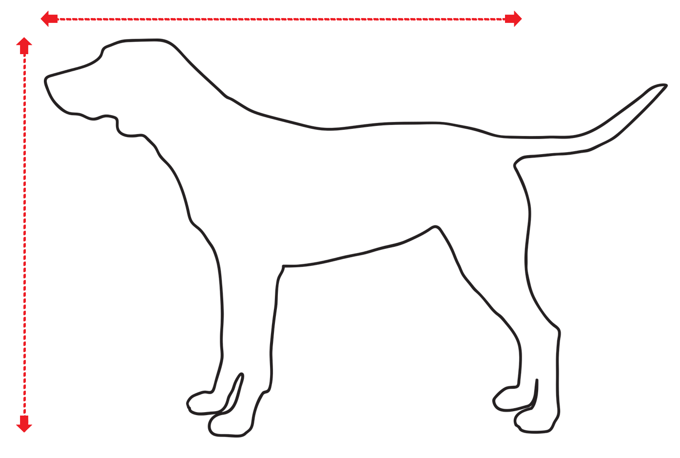 How to measure a dog correctly
